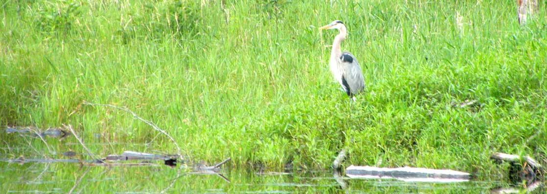 slide-heron